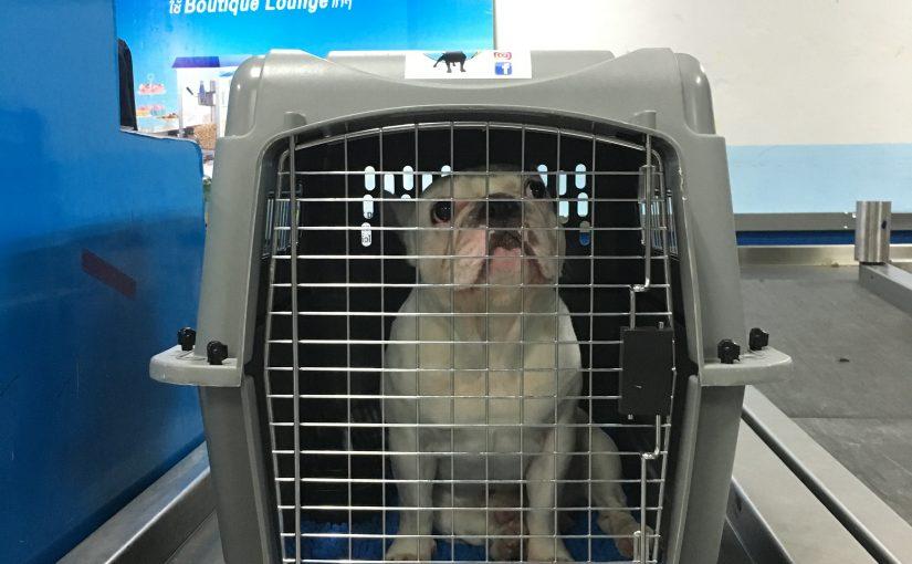 Voyager en avion avec un chien