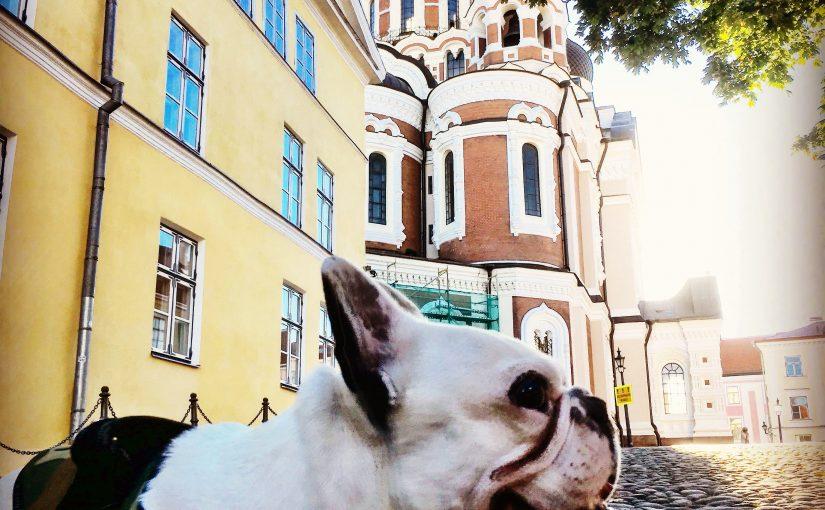 📍🇪🇪 Gamin est en Estonie