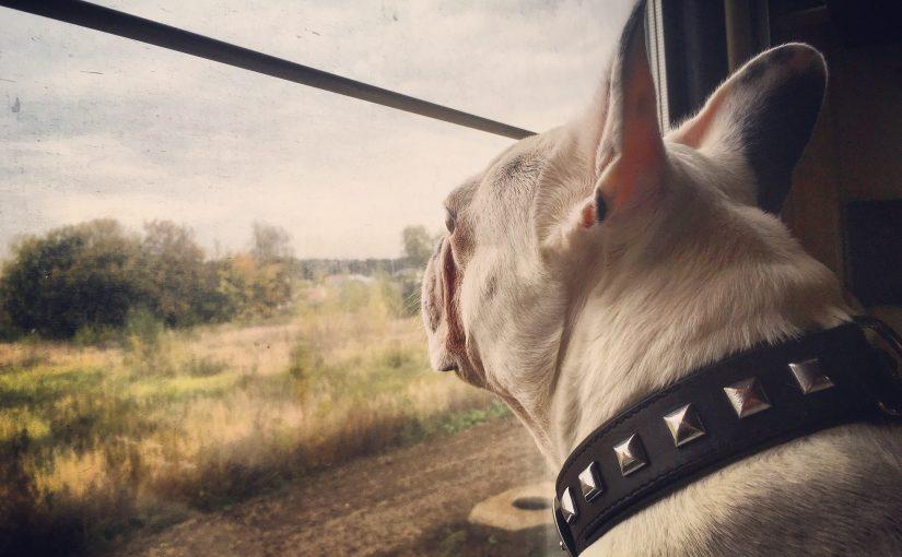 Prendre le transsibérien avec son chien